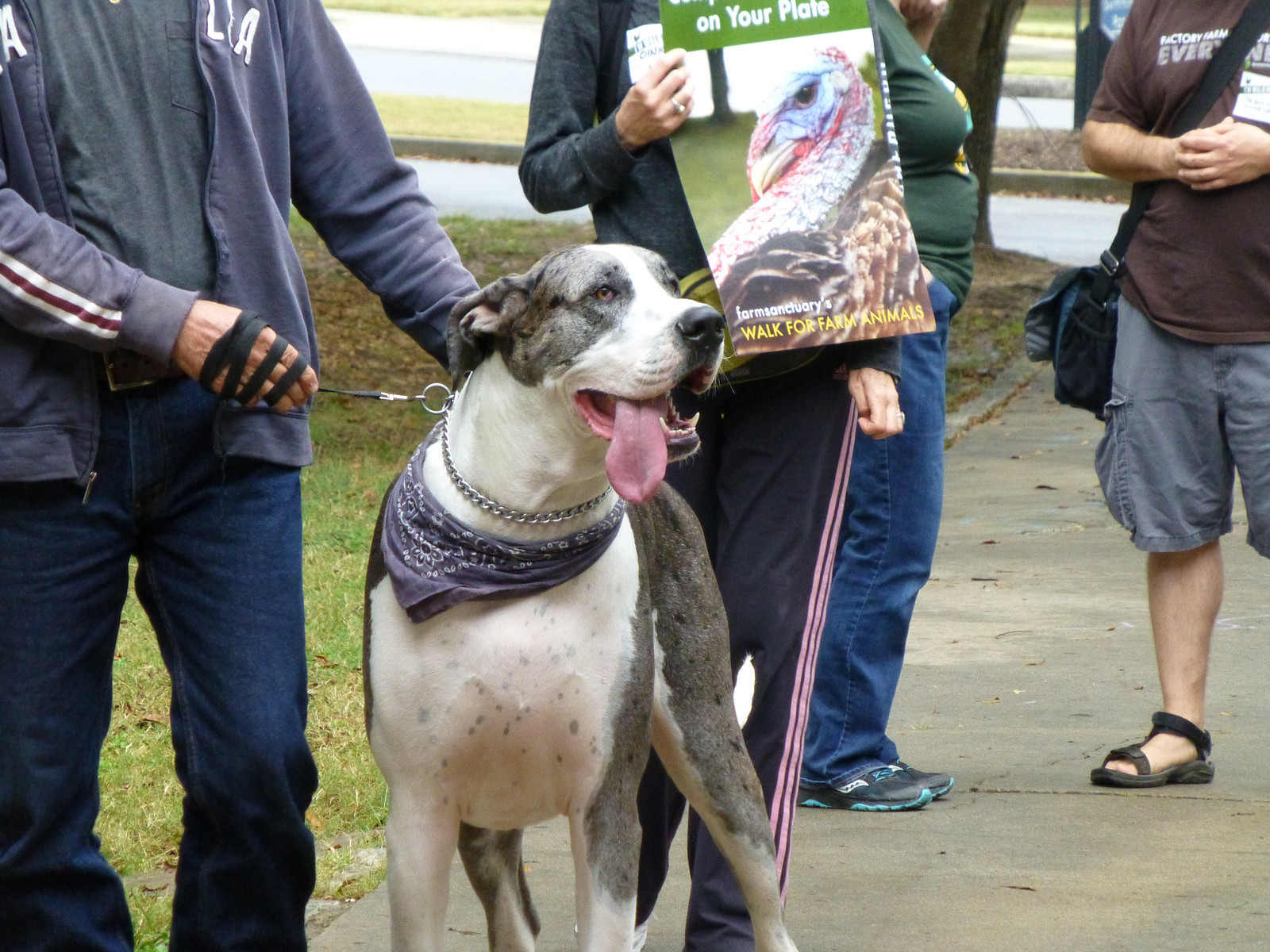 walk-for-animals-2013-10-19-g
