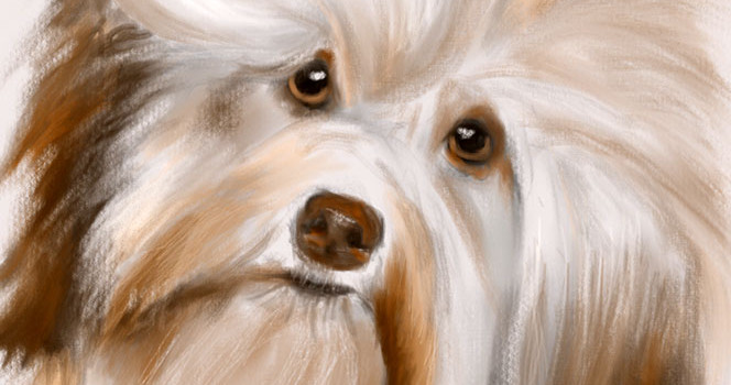 Digital Puppy Painting with Stroke by Stroke Video