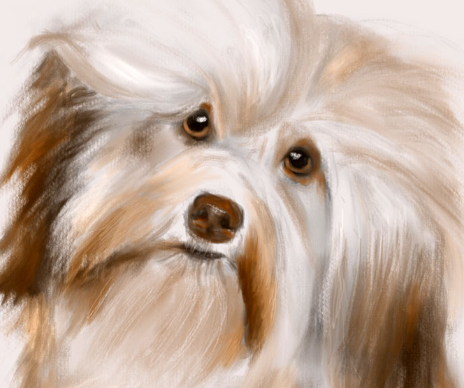 Digital Painting of Puppy Dog done with Procreate on an iPad